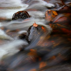 Lonely leaf (snowyturner) Tags: longexposure river leaf rocks rustic devon dartmoor dart ashburton ausewell