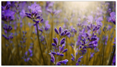 Lavandula siccatio (Makani_Photography) Tags: art artistic lavender dry drought hue lavendel lavandula