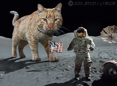 """Houston we have a problem"" (jrtce1) Tags: moon cat photoshop fun funny space humor surreal astronaut nasa scifi sciencefiction apollo lunar cattoy neilarmstrong lunarrover giantcat apollo15 lunarlanding nasahumor pse7 jrtce1 surrealspaceart"