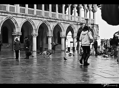 Venice (Virginia Wilhelmer) Tags: life street city venice italy dog rain fog canon photography san tourists 7d marco piazza palazzo venezia venedig ducale