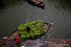 Life and living XX (Sopnochora) Tags: life canon river eos living boat riverside banana story transportation dhaka bangladesh 1022mm sadarghat 500d canoneos500d lifeandliving sopnochora apumbyahoocom businessrelatedonriver