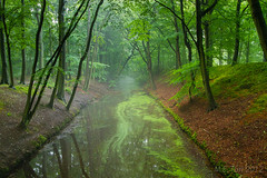 The forest... (Marcel Tuit) Tags: park mist holland me water fog forest canon landscape eos bomen nederland thenetherlands denhaag hague 7d bos landschap treest clingendael duinbos marceltuit