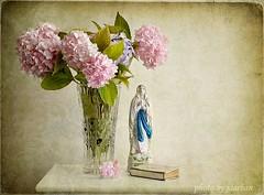 emily room II (Jasenka Arbanas) Tags: life still
