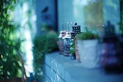 L1010884 (toystore01kkk) Tags: life leica autumn flower toy 50mm arts 北京 玩具 收藏 生活 胡同 m9 秋天 艺术 2011 潮流 095 大熊 技安 徕卡 leicam9 leicanoctilux50mmf095 蛋核 eggcore 重机派对北京展