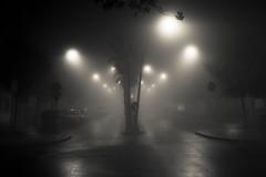 Niebla en Jerez (WWW.MONTELIUS.INFO) Tags: mist fog de la niklas andalucia cadiz niebla frontera fotgrafo diciembre jerez fotografo dimma montelius
