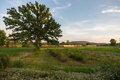 Sunset at the Onion Fields (sullivan1985) Tags: railroad summer ny newyork train july railway chester orangecounty westbound yellowjacket susquehanna susieq emd sd60 nysw newyorksusquehannawestern su99 onionfields nysw3804 nysw3802 nysw3806