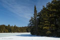 Winter on Dizzy Lake (awaketoadream) Tags: park winter lake snow ontario canada ice landscape march central trail evergreens algonquin wilderness dizzy conifers provincial mizzy