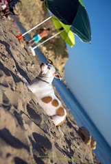 kiki_beach_umbrella_dmp (davidmitchell.photography) Tags: dog beach bozcaada sun sea sand blue