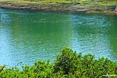 acque verdi tranquille (archgionni) Tags: water fiume river po torino turin piemonte italia italy verde green