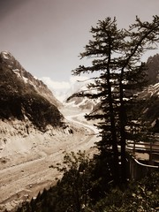 Mer de Glace (AmyEAnderson) Tags: trees merdeglace glacier france europe alps monochrome sepia mountains mountainside scenic montblanc rhonealpes