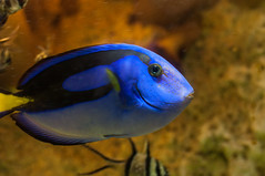 Acuario Agosto 2016 (81) (Fernando Soguero) Tags: acuario zaragoza acuariodezaragoza aragn turismo aquarium nikon d5000 fsoguero fernandosoguero