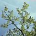 Summer branches - part 1