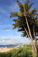sun came out (1600 Squirrels) Tags: 1600squirrels photo 5dii lenstagged canon24105 palm tree shipwreck beach grandhyatt poipu southshore kauai kauaicounty hawaii usa morning