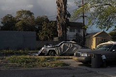 Ghosts, south LA (ADMurr) Tags: la southla leading lr ul palm cars cover leica m 50mm zeiss planar zm