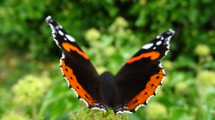 butterfly (beate krems) Tags: flgel abflug garten
