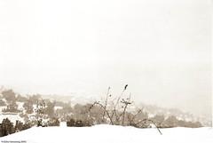 Disappearance (zaherbenazoug) Tags: bejaia algeria microclimat atmosphre faune floremountain blurred harmony snowscene landscape cityscape winterscene weather neige monochrome white background extrieur