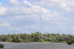 riparian forests in the estuaries of De Biesbosch National Park, Noord Brabant, NL (Eloy Revilla) Tags: biesbosch netherlands nationalpark