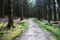 Von Willingen nach Usseln (dieter.steffmann) Tags: rothaargebirge hochsauerland rothaarsteig winterberg hildfeld hopperkopf