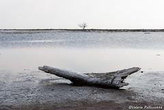 (Val_pe) Tags: tronco lago cielo agua rbol paisaje tree lake sky landscape