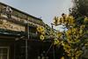 Till_Junker_20160914-_ILL4687 (till_junker) Tags: reetdach reetdachdecker dachdecker handwerk stade reetdachdeckerjunker reetdachhaus junker stadehagen landkreis natur umwelt nature handmade
