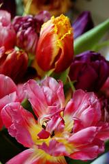 Bright colours (gornabanja) Tags: flower flowers tulip tulips bright pink colours colors colourful colorful petals plants nature nikon d70 bouquet