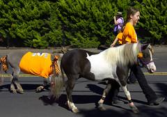 Miniature Horses (swong95765) Tags: horse pony miniature parade street walking cute