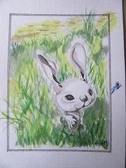 Patafix 2 (mmarple62) Tags: patafix egon lapin rabbit bunny aquarelle watercolor autodidacte art dessin drawing