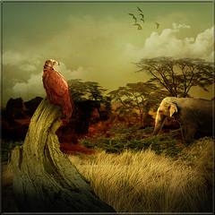 Savannah (jaci XIII) Tags: elephant tree bird landscape pssaro paisagem trunk vulture tronco rvore elefante savanna savana abutre