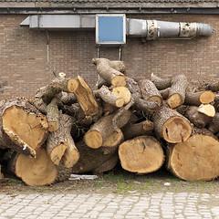 (Crausby) Tags: wood trees urban mediumformat germany square hasselblad urbannature chopped trunks sennelager mittelformat h3d newtopography