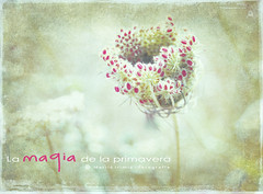 La magia de la primavera ... (Maril Irimia) Tags: flowers flores primavera photoshop spring nikon may mayo wildflowers mayflowers softcolors colorespastel pastelcolors floressilvestres phototextured coloressuaves floresdelcampo mesdelasflores oltusfotos mygearandme marilirimia monthofflowers marilirimiafotografa fotografatexturizada fotoeditadaconps photoeditedwithps fotoeditadacontexturas textureseditedphoto mesdemayoflorido