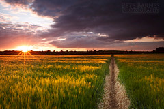 Path through the field at sunset - Explore (Pete Barnes Photography) Tags: light sunset sky cloud english field sunrise landscape photography evening corn warm britain path walk farm wheat dramatic scene trail wakefield british agriculture footpath westyorkshire woolley