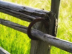 Landlust (redstarpictures) Tags: wood stilllife green nature fence weide natur meadow wiese stilleben eifel gras grn zaun holz horsehoe natrlich landlust gatter hufeisen