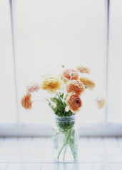 Above all, be the heroine of your life, not the victim (*Cinnamon) Tags: flowers film window mediumformat ranunculus instant contax645 polaroidback fujifp100c