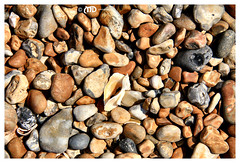 Spot the odd one out (La_Marghe) Tags: summer beach sunshine canon brighton pebbles seashell yabbadabbadoo canonefs18200mmf3556is eos550d