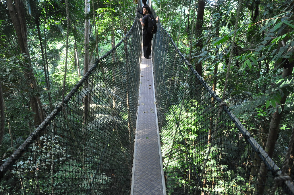 Views from the Canopy Walk, Taman Negara National Park, Malaysia
