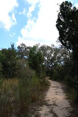 Pine Ridge Trail