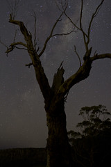 The Night Sky (mthomson34) Tags: tree stars melbourne astrophotography milkyway Astrometrydotnet:status=solved Astrometrydotnet:version=14400 Astrometrydotnet:id=alpha20120720899633