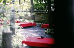 20120724 000. (Demi Hayashi) Tags: red tree film nature japan 35mm canon temple golden kyoto fuji buddhist zen 京都 日本 pavilion a1 金閣寺 kinkakuji