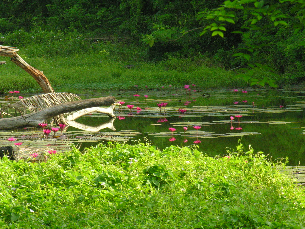 Pond and flowers, Ko Surin, Southern Thailand