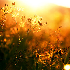 Golden Nights (Sophia Alexis) Tags: alexis light sunset summer photoshop canon eos 50mm golden sigma 7d sophia