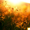 Golden Nights (Sophia Alexis) Tags: alexis light sunset summer photoshop canon eos 50mm golden sigma 7d sophia
