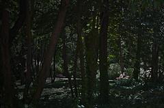leyendo (orozco-fotos) Tags: madrid gardens tokina1224 jardines orozco palacioreal campodelmoro corozco orozcofotos