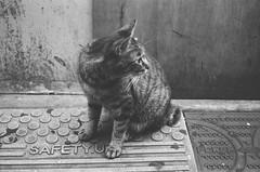 RETINA a  ORIENTAL (New Seagull 100 ) (Tokyo Amigo) Tags: blackandwhite bw filmcamera oriental retina   monochromephotography retinaia    ia seagull100