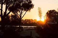 Sunset through trees (Osama Ali Photography) Tags: naturaleza nature shadows silhouette silueta sun sunset sol ocaso lake rays       lago rboles sky tree trees natura espaa