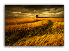 Almost Time... (RonnieLMills) Tags: old abandoned ruined stone mill stonework barley field farming agriculture tractor lines dark cloudy skies kearney road point quintin bay cloughey county down northern ireland nikon d90 tamron 1024 wide angle landscape