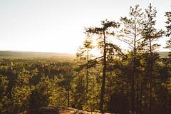 (DrowsyPotato) Tags: nature folk live life explore mountains mountain hill hills a7rii mark ii a7r2 135mm bokeh bokehful natural light sweden august chasers journal outdoorsy outdoors tree trees woods jmtland sverige swe scandinavia 35mm