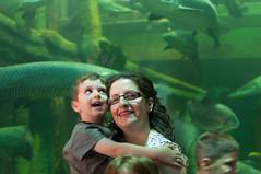 Acuario Agosto 2016 (01) (Fernando Soguero) Tags: acuario zaragoza acuariodezaragoza aragn turismo aquarium nikon d5000 fsoguero fernandosoguero