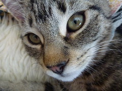 Masai ! (Mara 1) Tags: portrait whiskers eyes nose