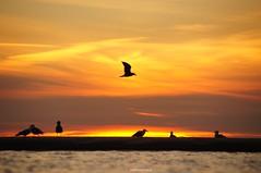 DSC07638 (ZANDVOORTfoto.nl) Tags: zandvoortfotonl zandvoortfoto zee ondergaande zon zonsondergang aan noordzee meeuwen strand sea northsea dutchcoast