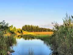 Wet prairie reflections HDR 20160821 (Kenneth Cole Schneider) Tags: florida miramar westbrowardwca